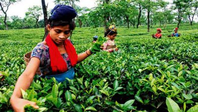 Photo of App for small tea growers launched