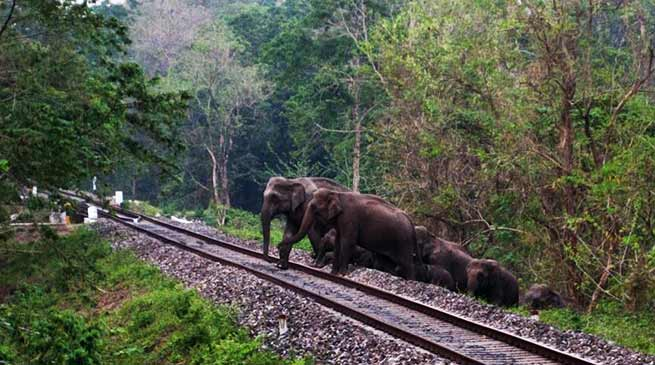 Assam- Prompt action by patrolmen prevents elephant dashing
