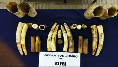 Photo of Assam:  DRI seized 24 pieces of ivory from a railway employee