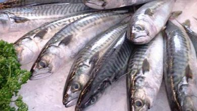Photo of Assam govt bans fish import from other state on formalin