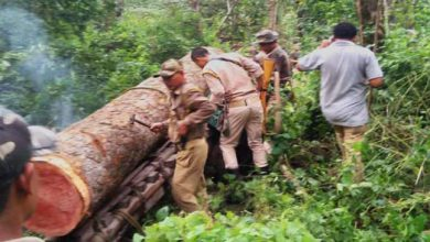 Photo of Assam:Fores officials seizes Illegal Sal Logs worth of Rs 10 Lakhs
