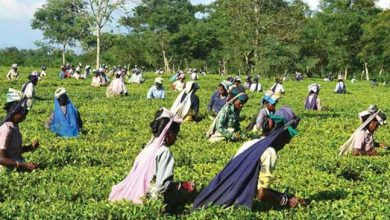 Photo of Assam:  Durga Puja bonus for tea garden workers discussed