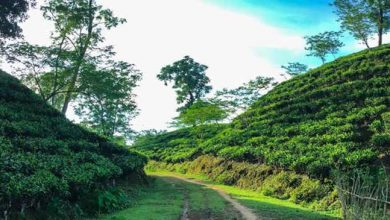 Photo of Assam: Ensure last-mile delivery of schemes, DC Hailakandi tells tea garden managers