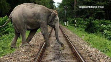 Photo of Assam: Elephant lost life in train accident near lumding