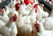 Photo of Assam: Training on poultry farming conducted in Hailakandi