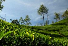 Photo of Tea industry in Assam, W-Bengal faces 2100 Cr loss due to Lockdown- ITA