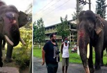 Photo of World Elephant Day: Meet World's Oldest Asiatic Tusker Bijuli Prasad