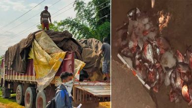 Photo of Assam: 480 kg stale fish imported from Andhra Pradesh seized and destroyed in Hailakandi